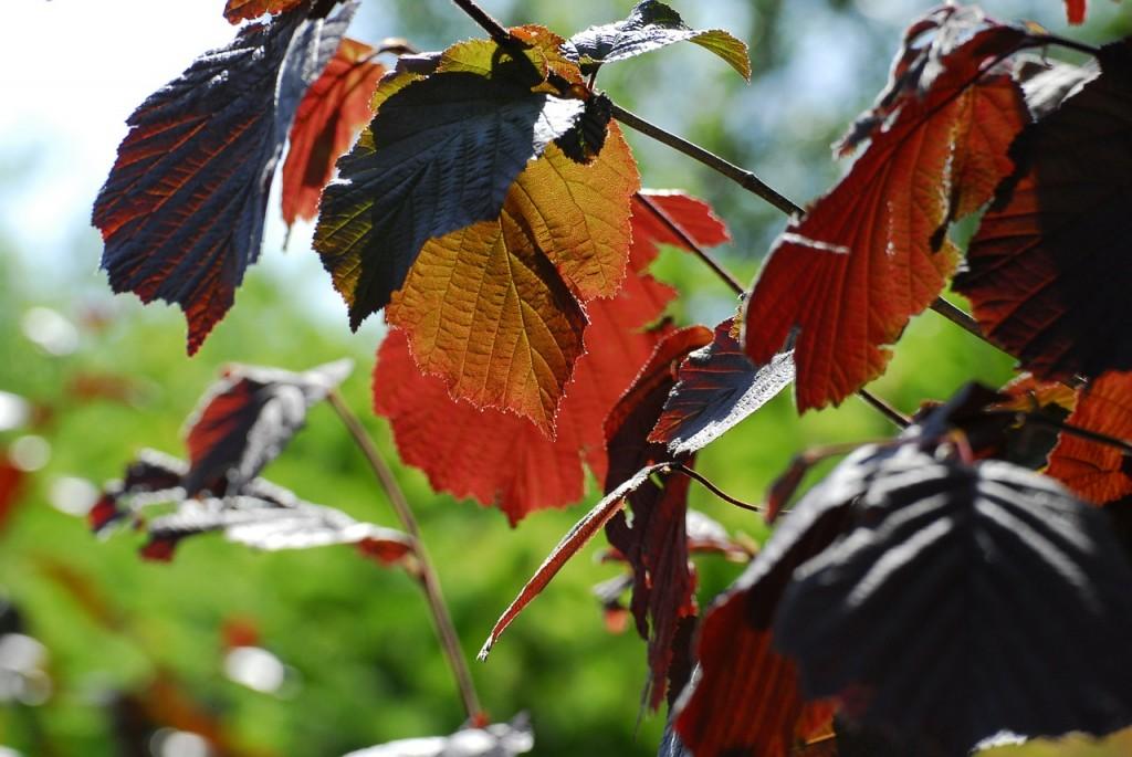 осінь фото