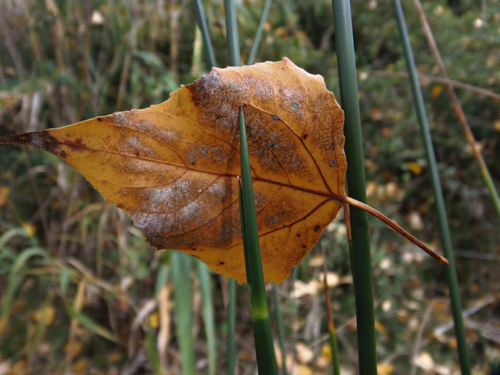 осінь фото 2