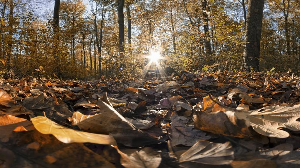 осінь фото1