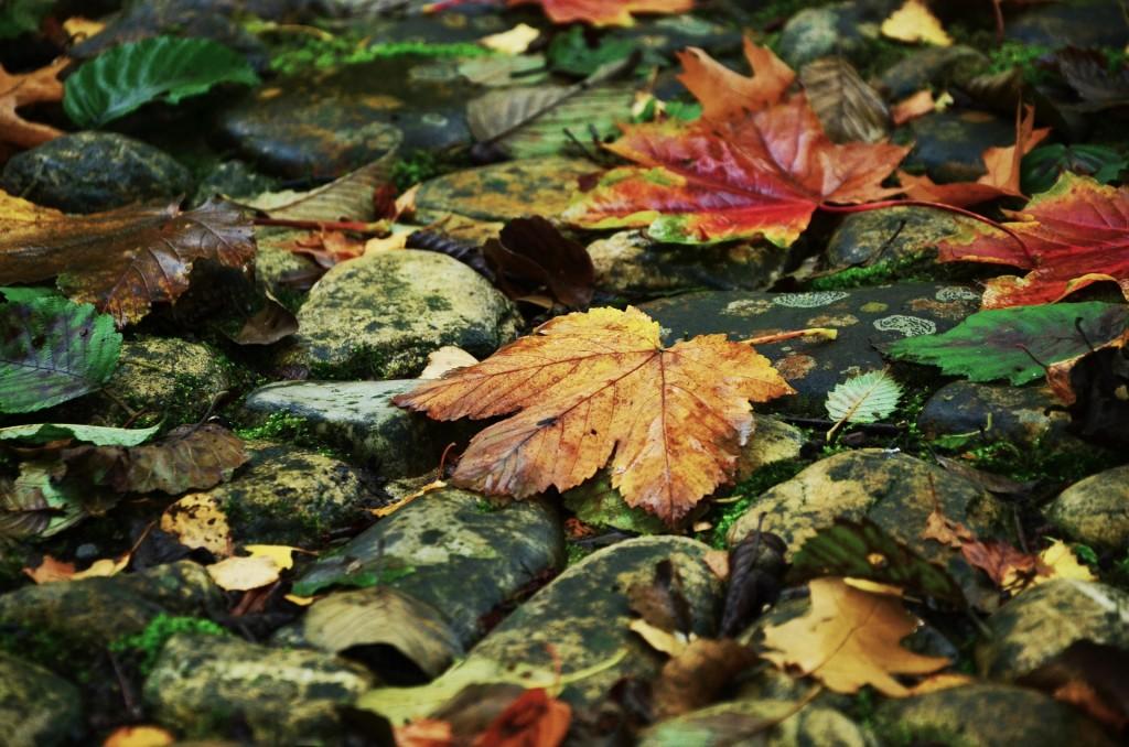 вірш про вересень 1