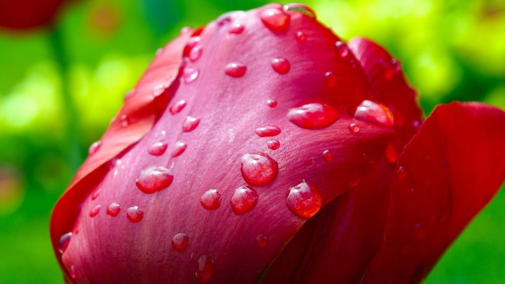 вірш про любов Спади мені дощем на груди