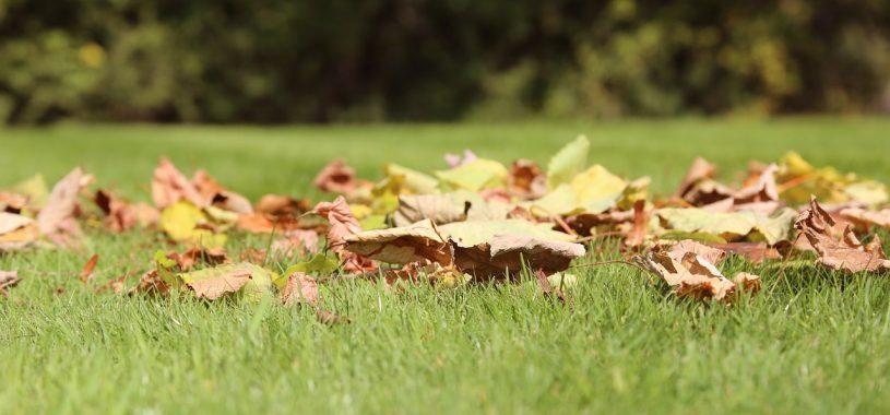 Осіння акварель: вірш про осінь Вадима Крищенка