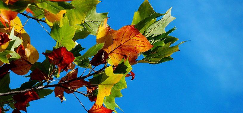 Вересень и серпень…Вірш про вересень, про осінь