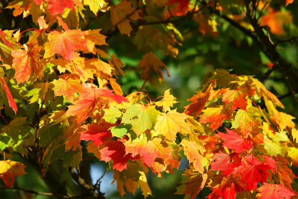 вірш про осінь 2