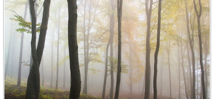 Красивий вірш про осінь