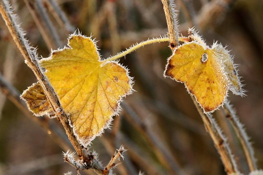 осінь фото 3
