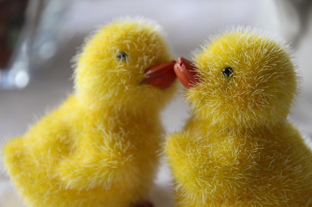 оповідання про тварин Дивне курча