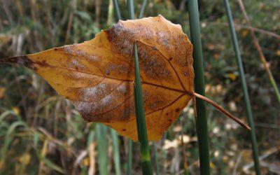Осінні танці – вірш про осінь дітям