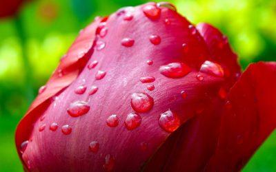 """""""Спади мені дощем на груди…"""" Вірш про любов Василя Симоненка"""