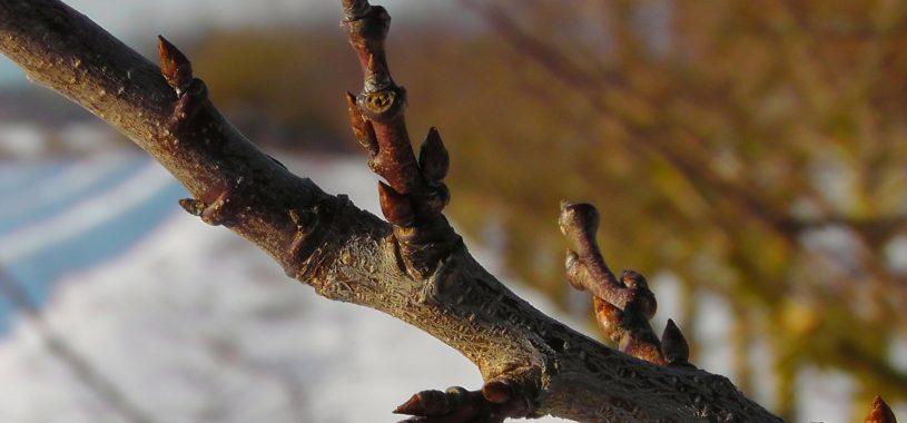 """Вірш про весну """"При корні води повна лунка…"""""""