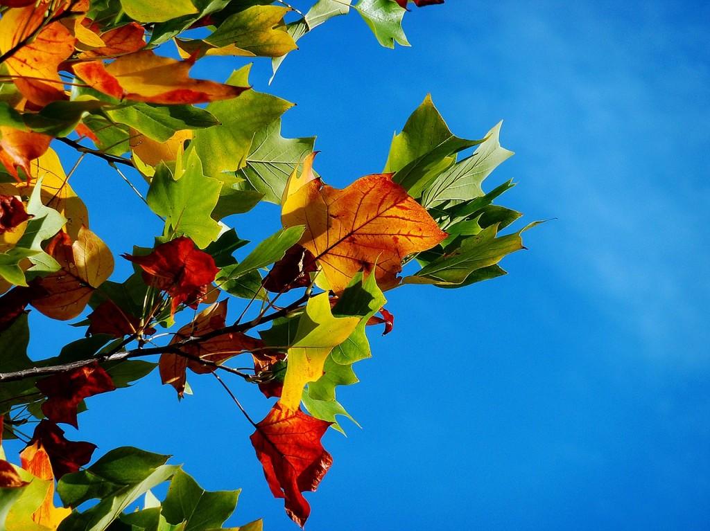 вірш про осінь 1