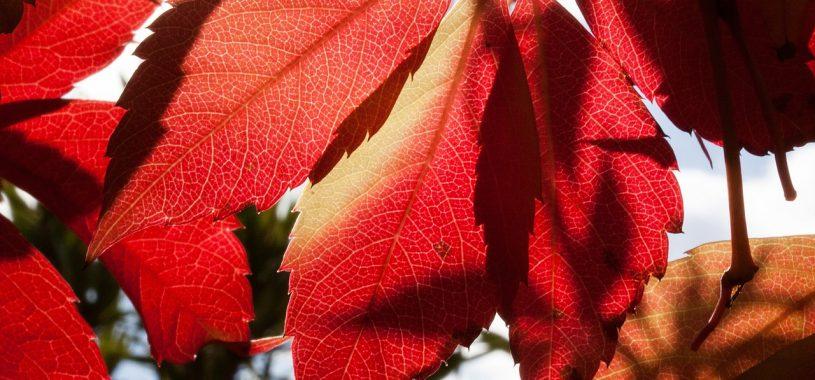 Золота осінь (фото)