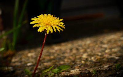 Весна. Вірш про весну для дітей