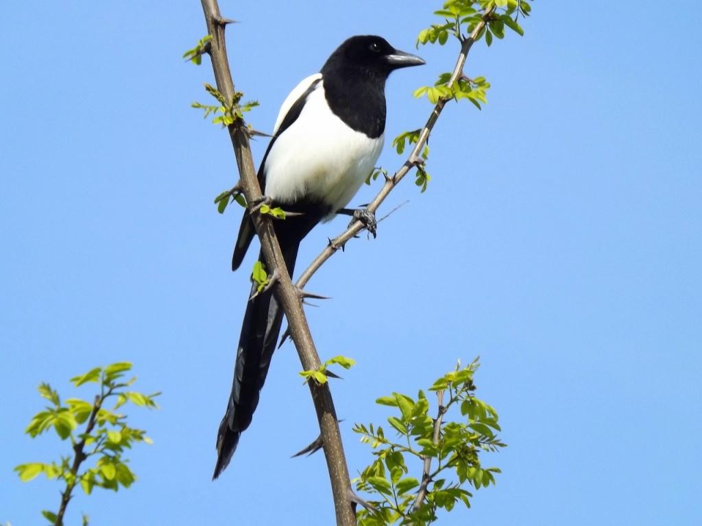 птахи фото