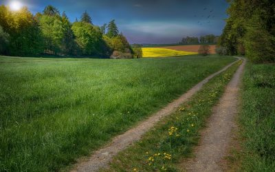 Вірш Івана Франка «Вже сонечко знов по лугах…»